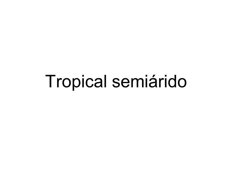 Tropical semiárido