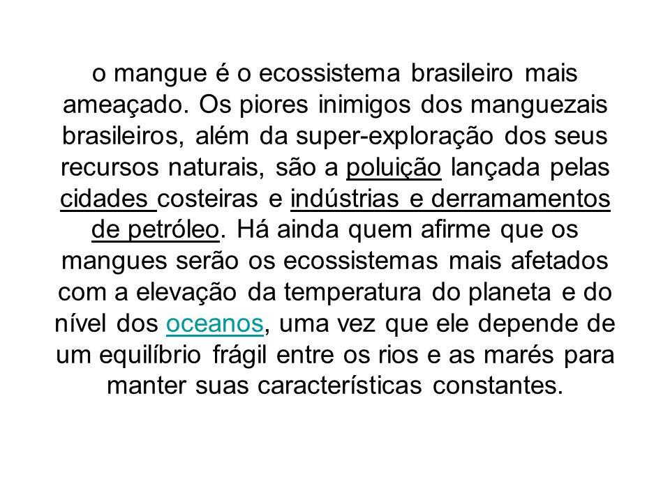 o mangue é o ecossistema brasileiro mais ameaçado