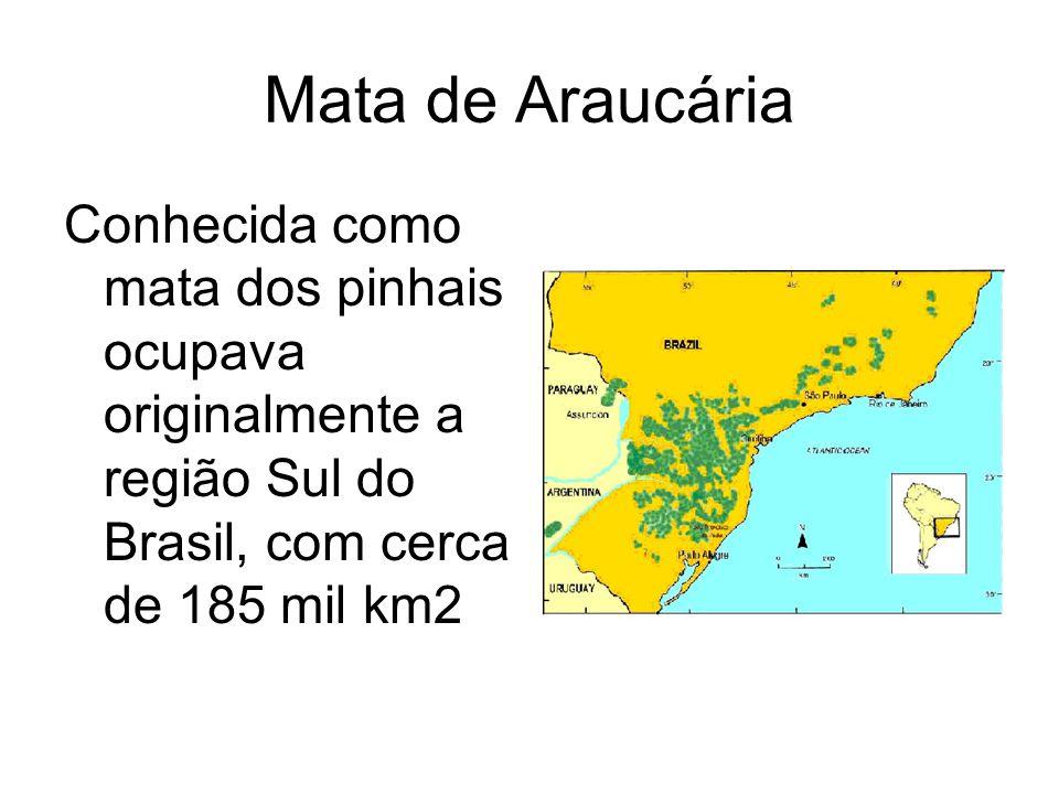 Mata de Araucária Conhecida como mata dos pinhais ocupava originalmente a região Sul do Brasil, com cerca de 185 mil km2.