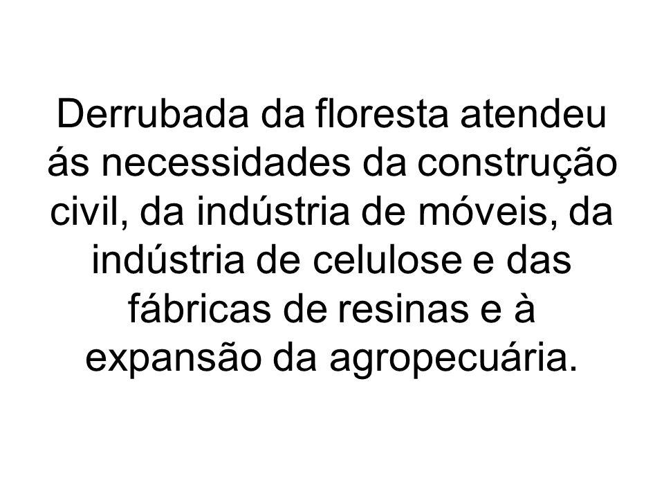 Derrubada da floresta atendeu ás necessidades da construção civil, da indústria de móveis, da indústria de celulose e das fábricas de resinas e à expansão da agropecuária.