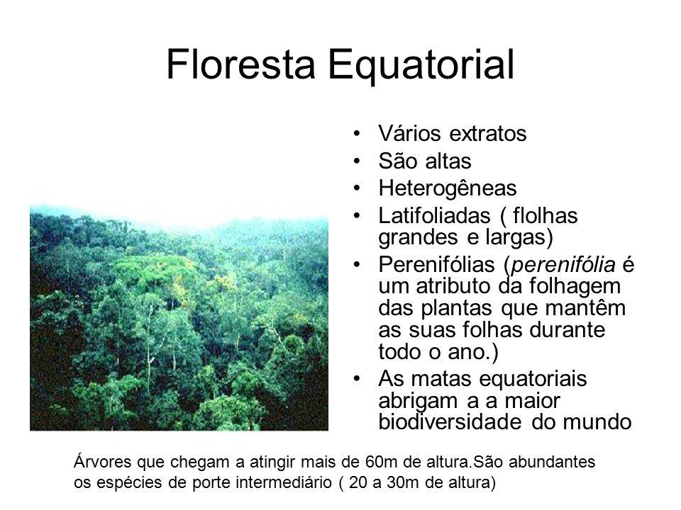 Floresta Equatorial Vários extratos São altas Heterogêneas