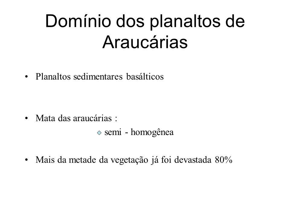 Domínio dos planaltos de Araucárias