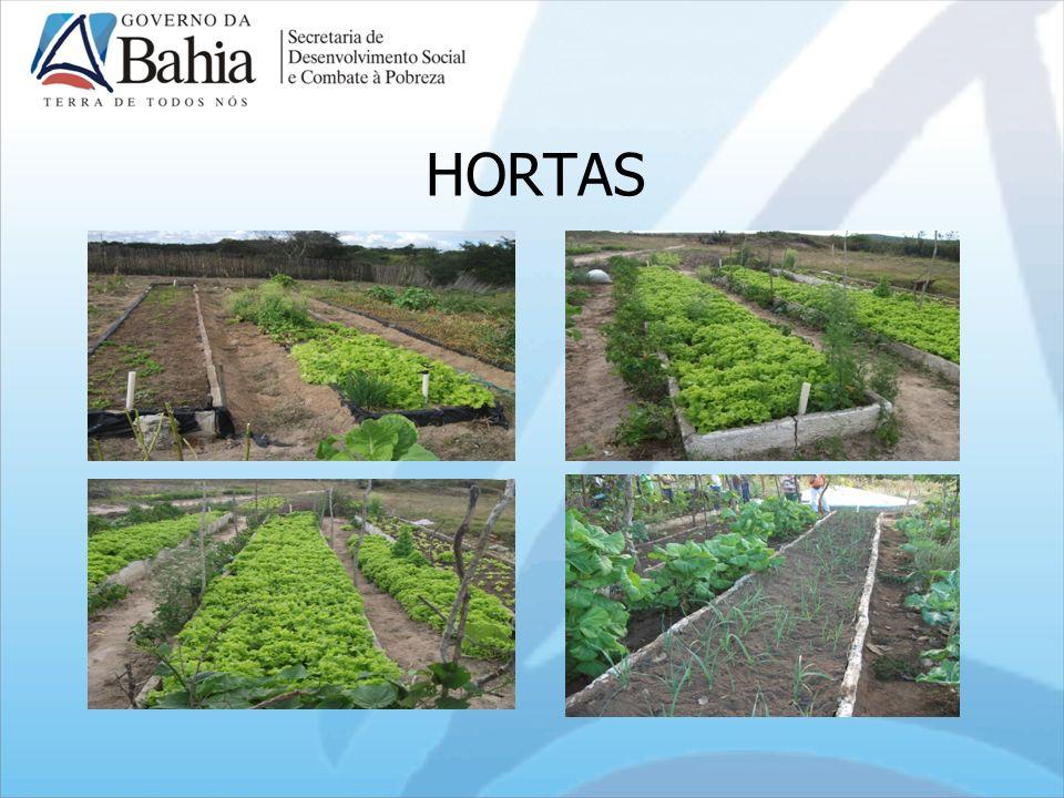 HORTAS