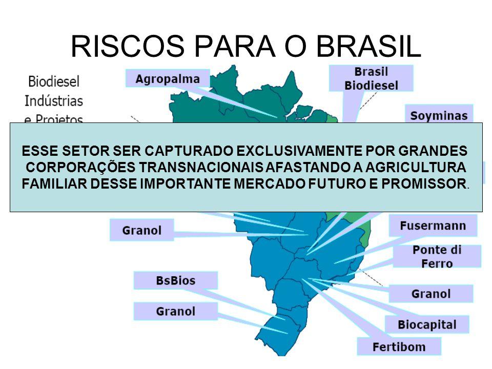 RISCOS PARA O BRASIL ESSE SETOR SER CAPTURADO EXCLUSIVAMENTE POR GRANDES. CORPORAÇÕES TRANSNACIONAIS AFASTANDO A AGRICULTURA.