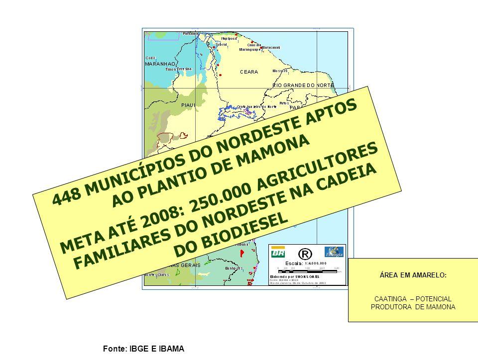 448 MUNICÍPIOS DO NORDESTE APTOS AO PLANTIO DE MAMONA