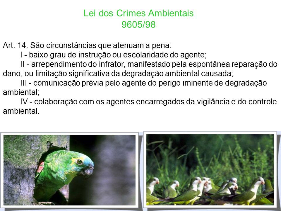 Lei dos Crimes Ambientais