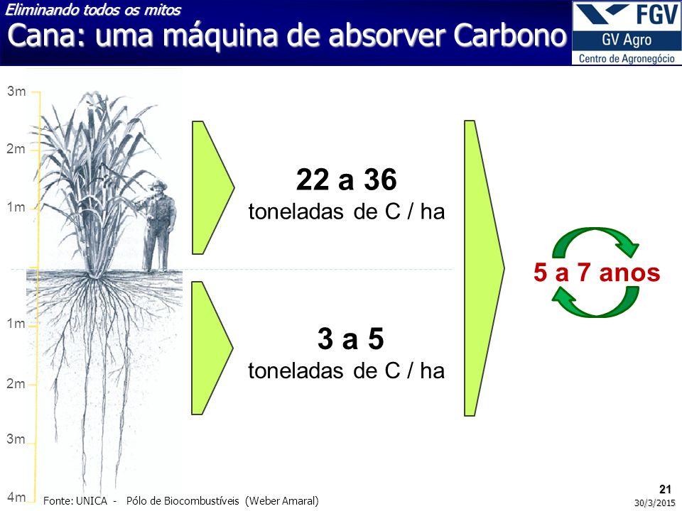 Cana: uma máquina de absorver Carbono