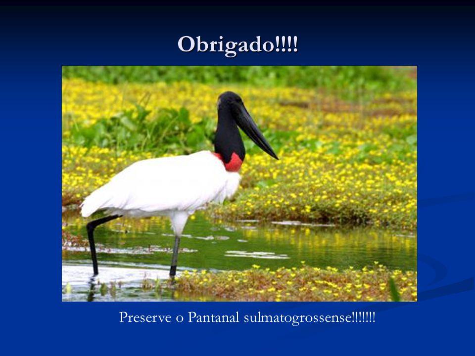 Obrigado!!!! Preserve o Pantanal sulmatogrossense!!!!!!!