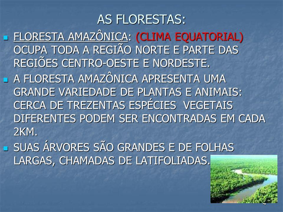 AS FLORESTAS: FLORESTA AMAZÔNICA: (CLIMA EQUATORIAL) OCUPA TODA A REGIÃO NORTE E PARTE DAS REGIÕES CENTRO-OESTE E NORDESTE.