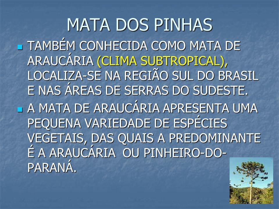 MATA DOS PINHAS TAMBÉM CONHECIDA COMO MATA DE ARAUCÁRIA (CLIMA SUBTROPICAL), LOCALIZA-SE NA REGIÃO SUL DO BRASIL E NAS ÁREAS DE SERRAS DO SUDESTE.