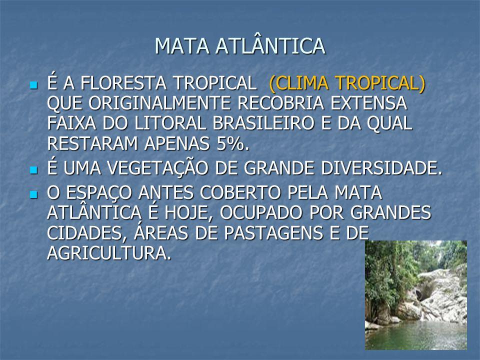MATA ATLÂNTICA É A FLORESTA TROPICAL (CLIMA TROPICAL) QUE ORIGINALMENTE RECOBRIA EXTENSA FAIXA DO LITORAL BRASILEIRO E DA QUAL RESTARAM APENAS 5%.