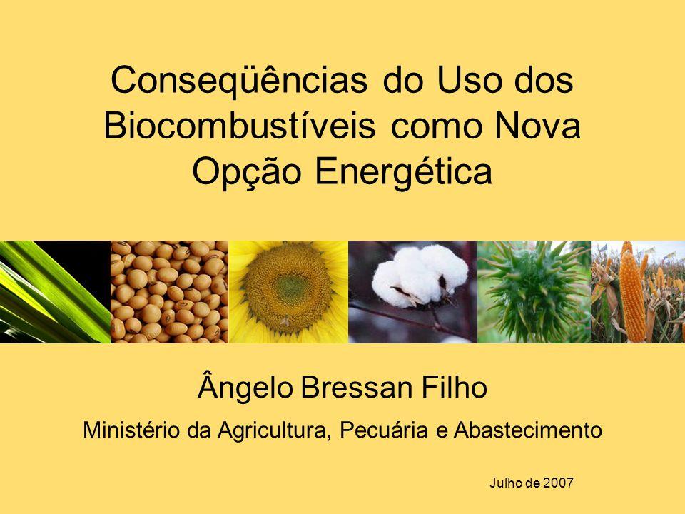 Conseqüências do Uso dos Biocombustíveis como Nova Opção Energética