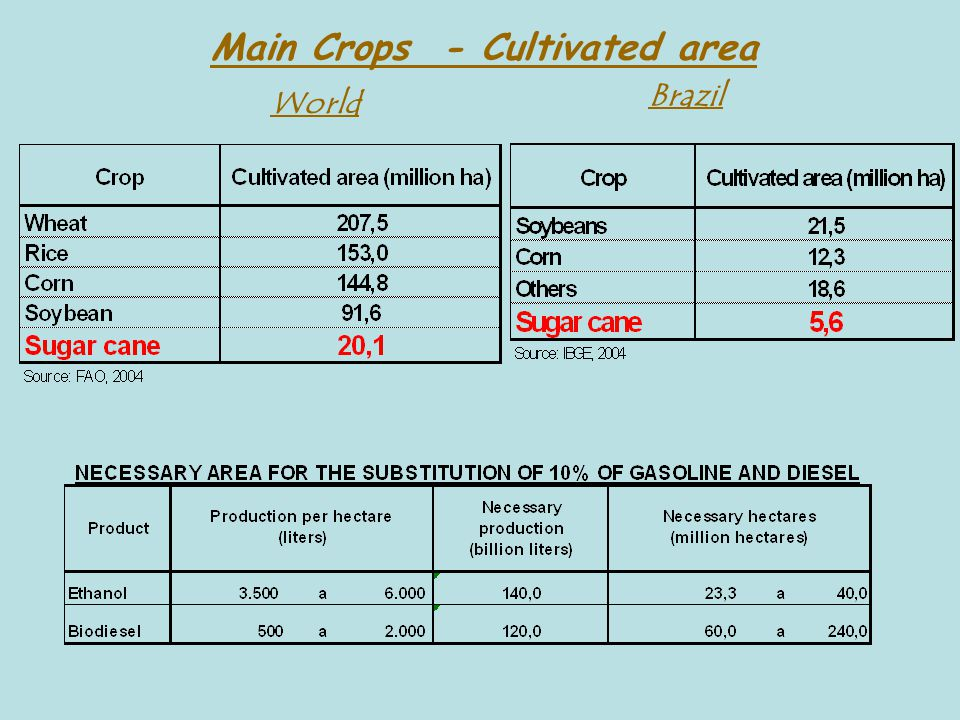 Main Crops - Cultivated area