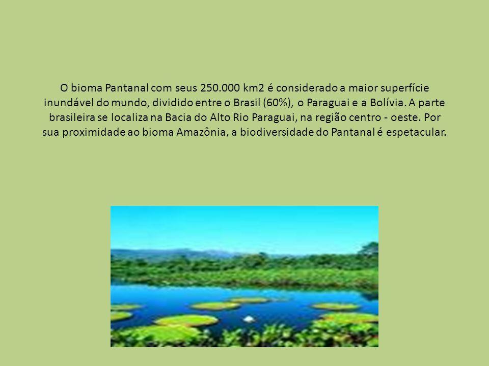 O bioma Pantanal com seus 250