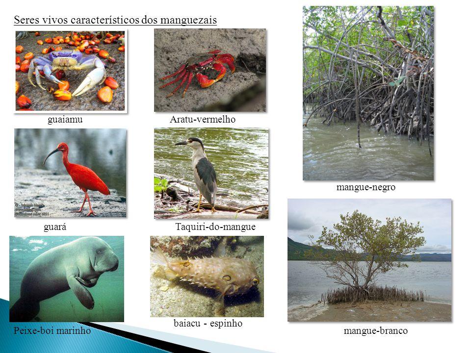 Seres vivos característicos dos manguezais