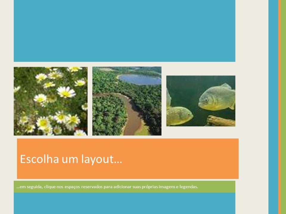 Escolha um layout… …em seguida, clique nos espaços reservados para adicionar suas próprias imagens e legendas.