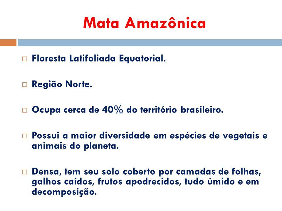Mata Amazônica Floresta Latifoliada Equatorial. Região Norte.