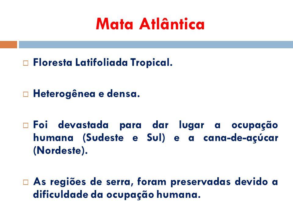 Mata Atlântica Floresta Latifoliada Tropical. Heterogênea e densa.