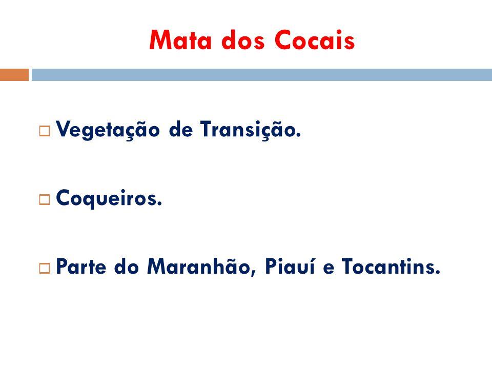 Mata dos Cocais Vegetação de Transição. Coqueiros.