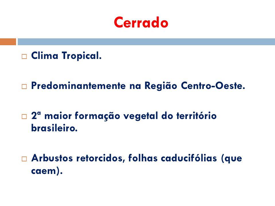 Cerrado Clima Tropical. Predominantemente na Região Centro-Oeste.