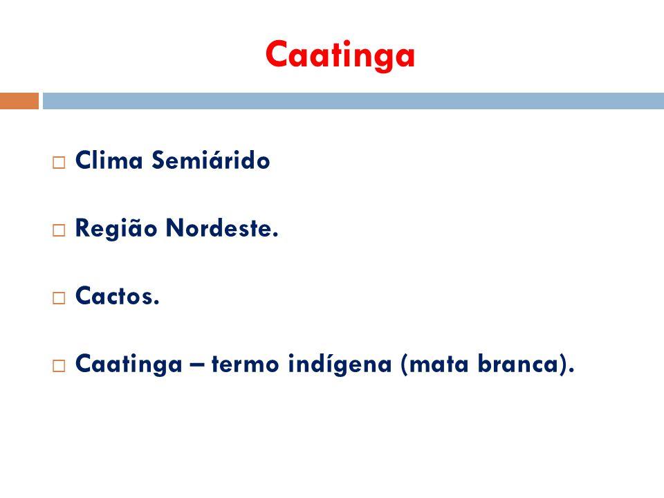 Caatinga Clima Semiárido Região Nordeste. Cactos.