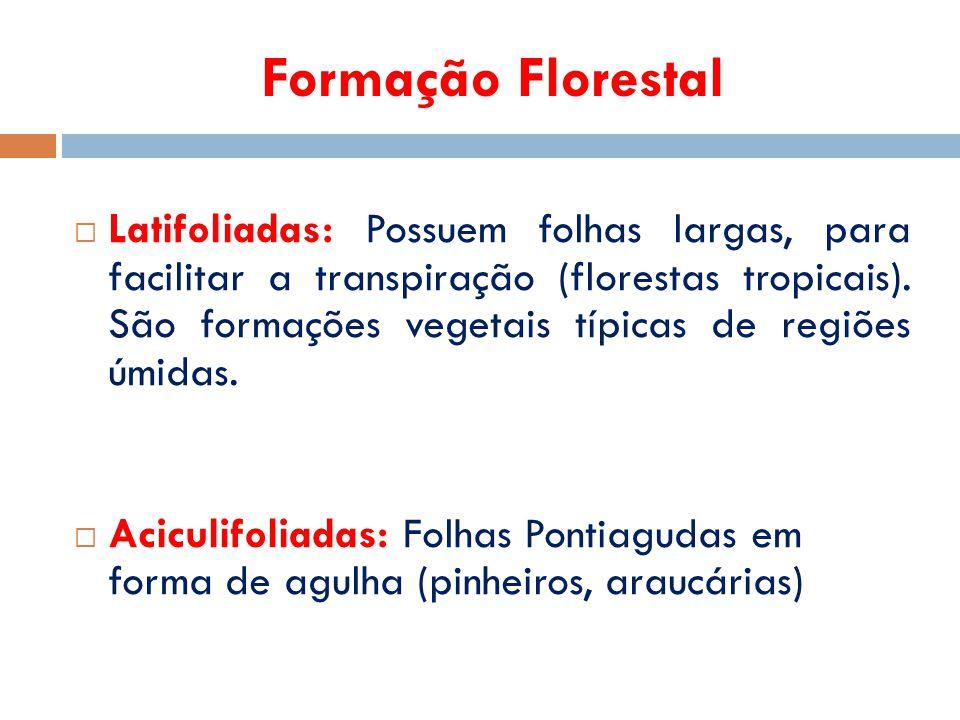 Formação Florestal