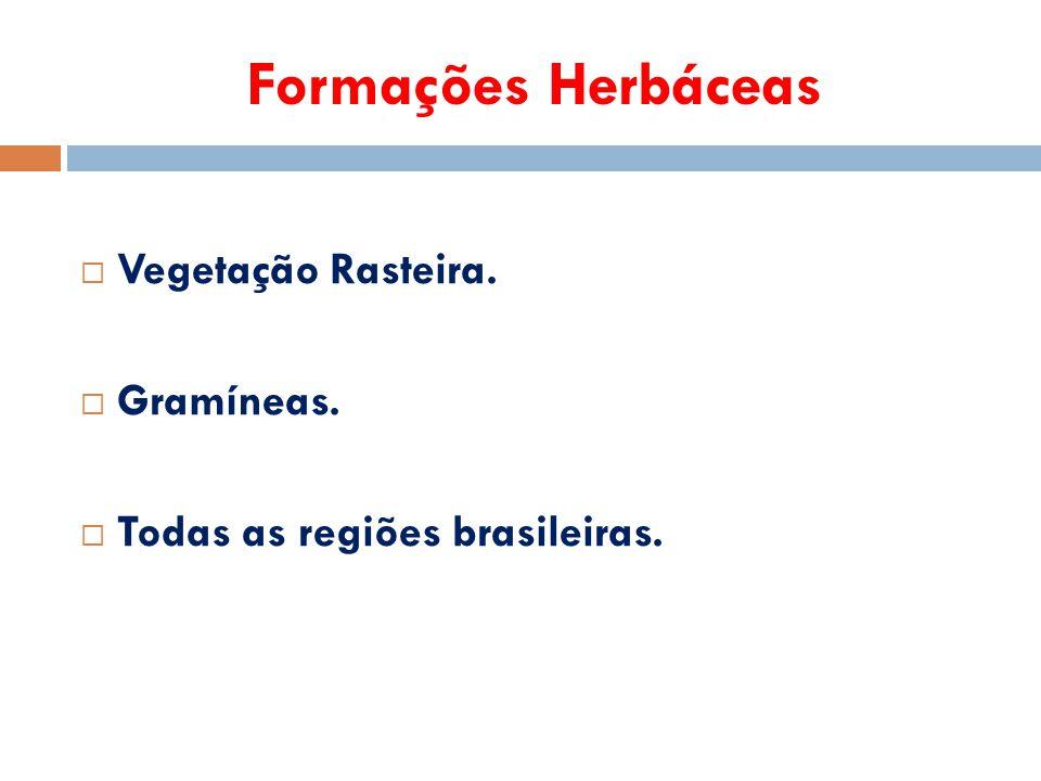Formações Herbáceas Vegetação Rasteira. Gramíneas.
