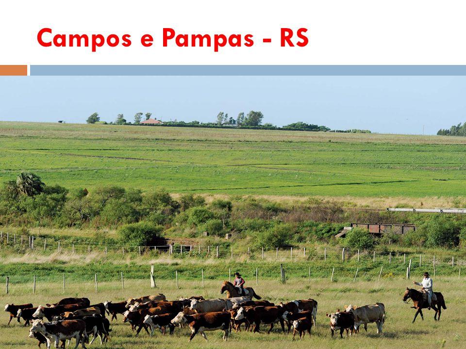 Campos e Pampas - RS