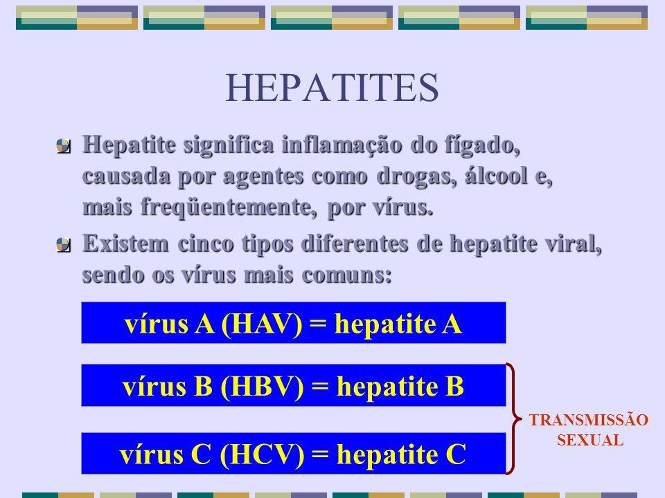 HEPATITES vírus A (HAV) = hepatite A vírus B (HBV) = hepatite B