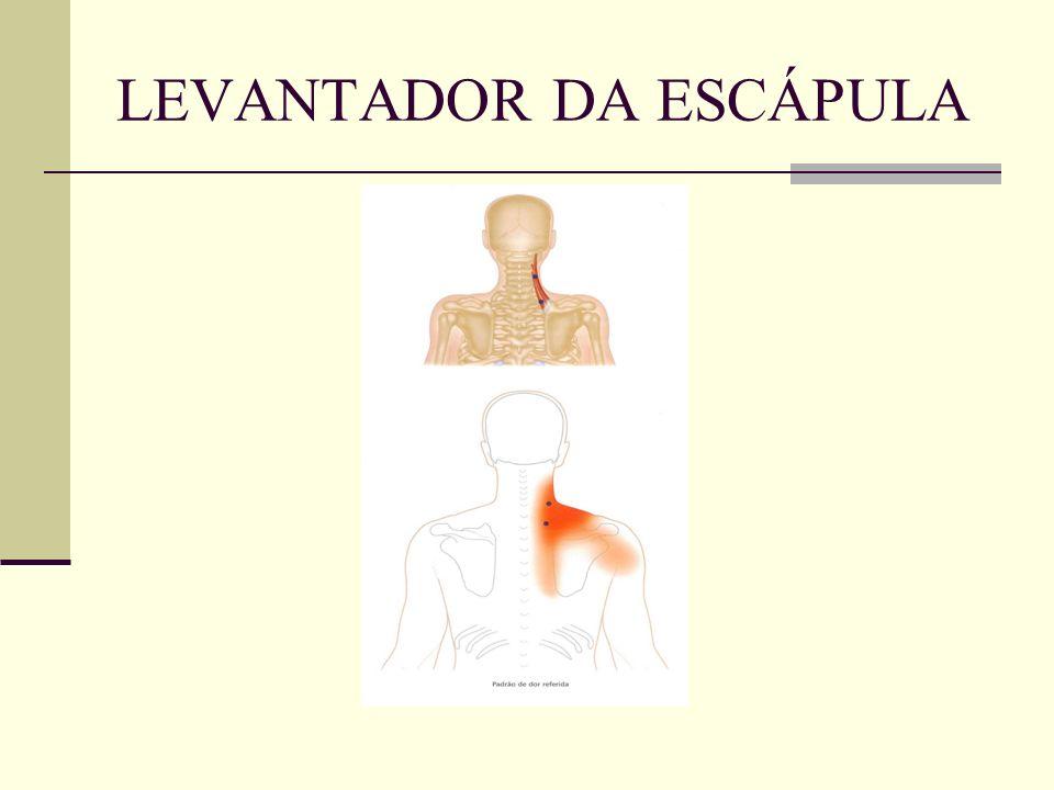 LEVANTADOR DA ESCÁPULA