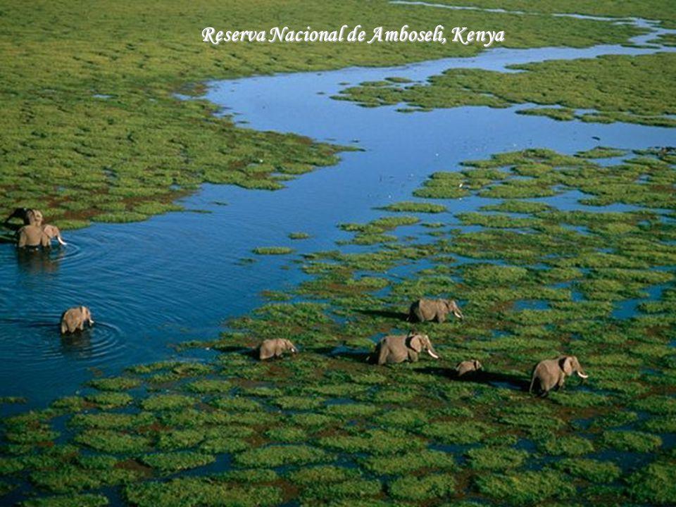 Reserva Nacional de Amboseli, Kenya