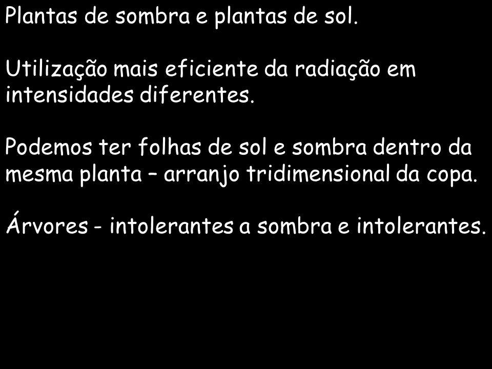 Plantas de sombra e plantas de sol.