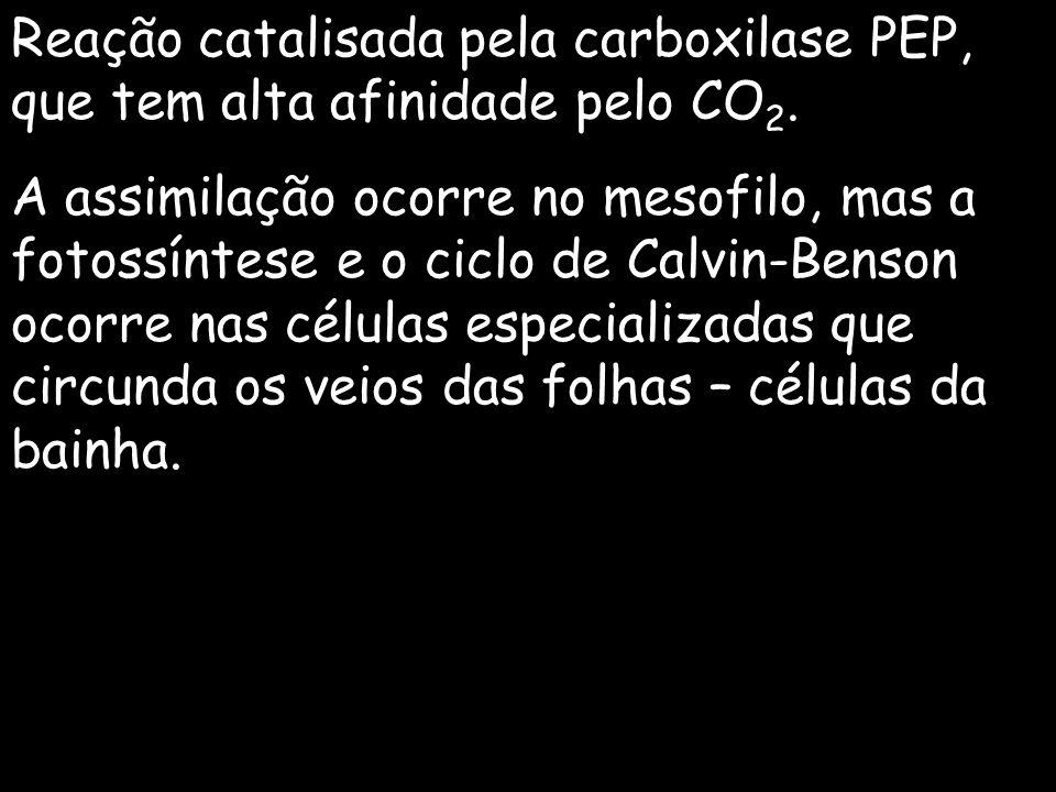Reação catalisada pela carboxilase PEP, que tem alta afinidade pelo CO2.