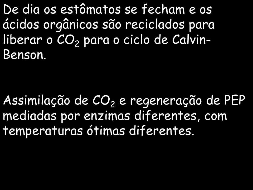 De dia os estômatos se fecham e os ácidos orgânicos são reciclados para liberar o CO2 para o ciclo de Calvin-Benson.