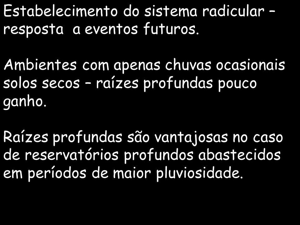Estabelecimento do sistema radicular – resposta a eventos futuros.