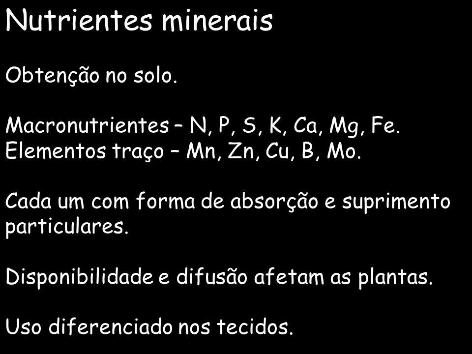 Nutrientes minerais Obtenção no solo.
