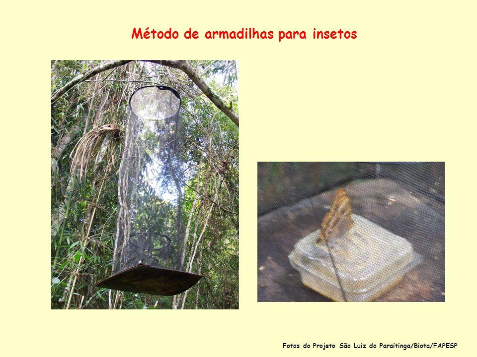 Método de armadilhas para insetos