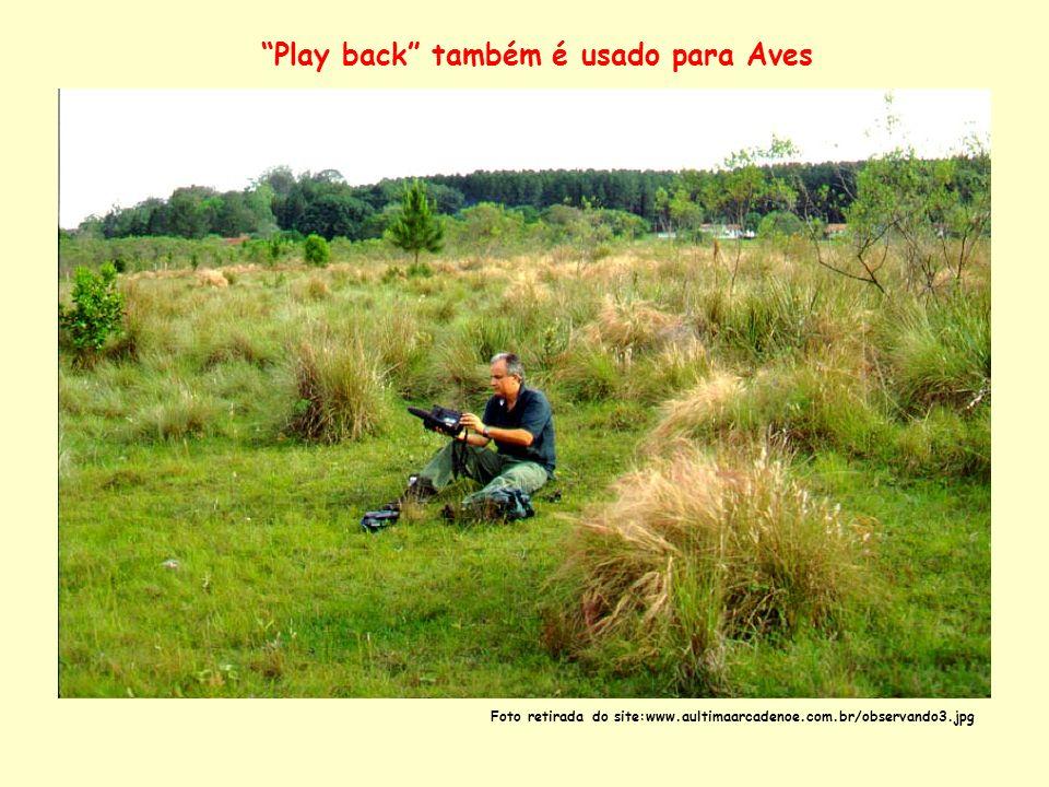 Play back também é usado para Aves