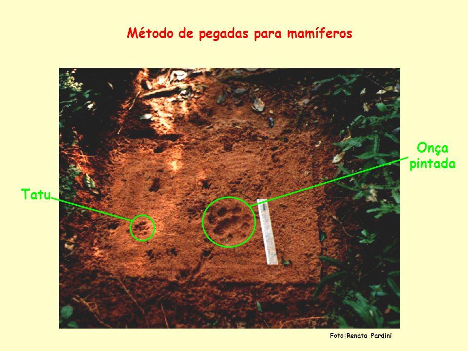 Método de pegadas para mamíferos