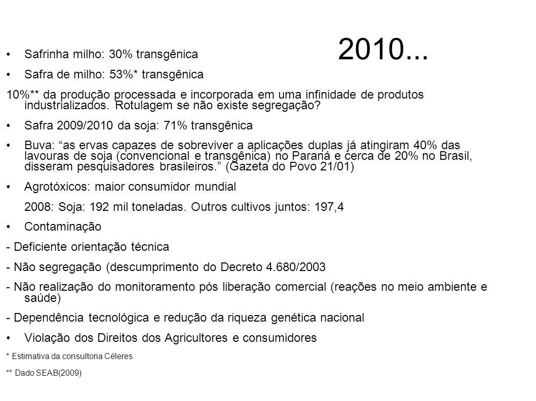 2010... Safrinha milho: 30% transgênica
