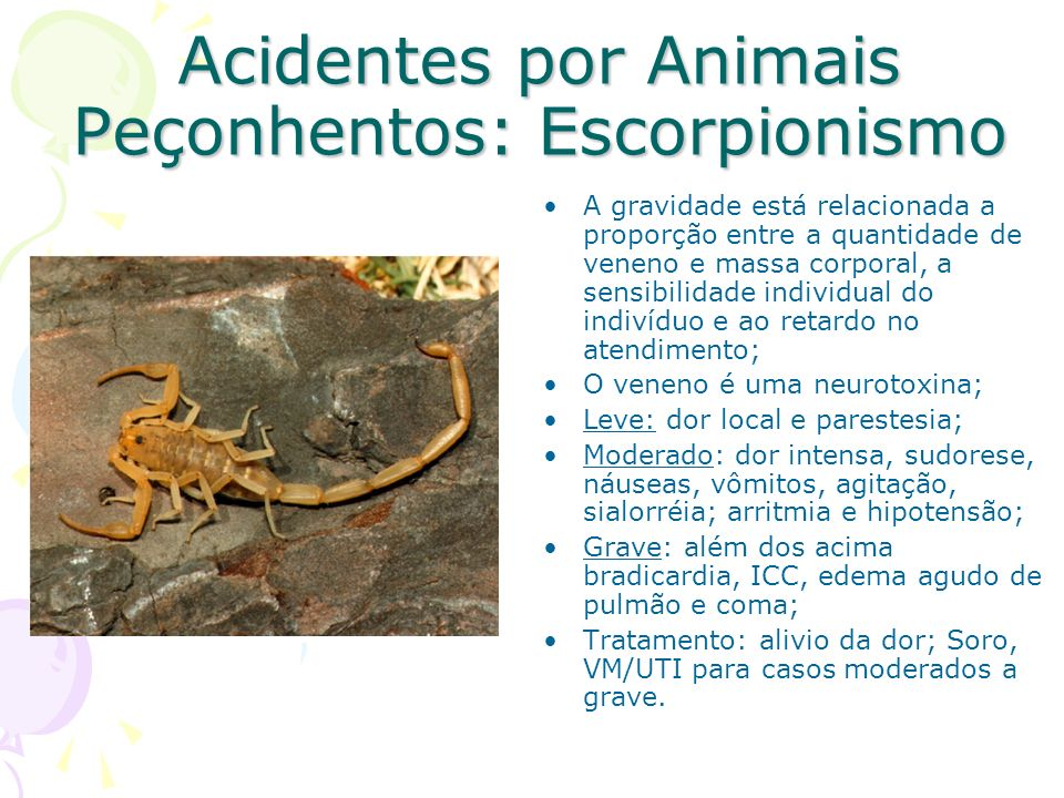 Acidentes por Animais Peçonhentos: Escorpionismo