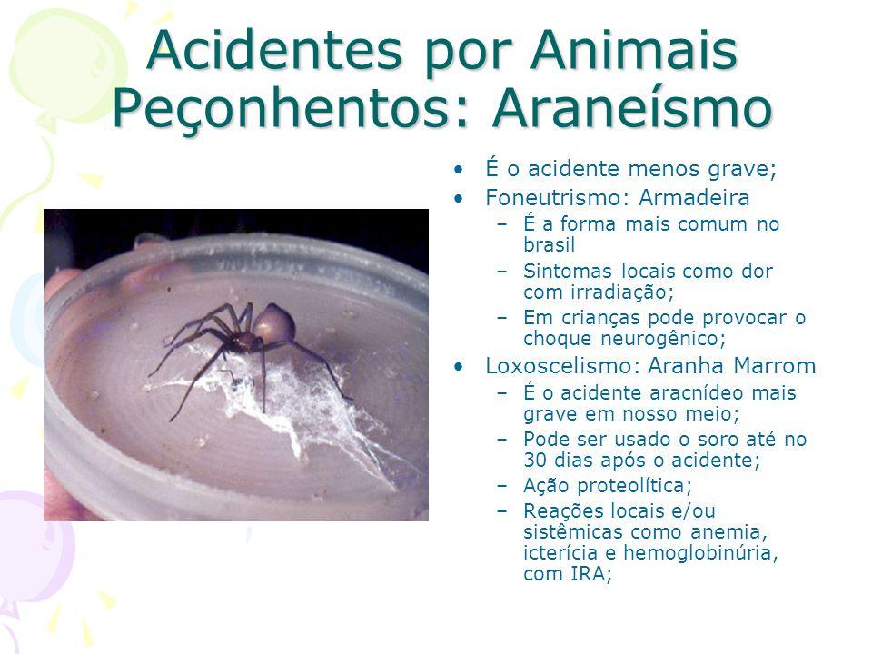 Acidentes por Animais Peçonhentos: Araneísmo