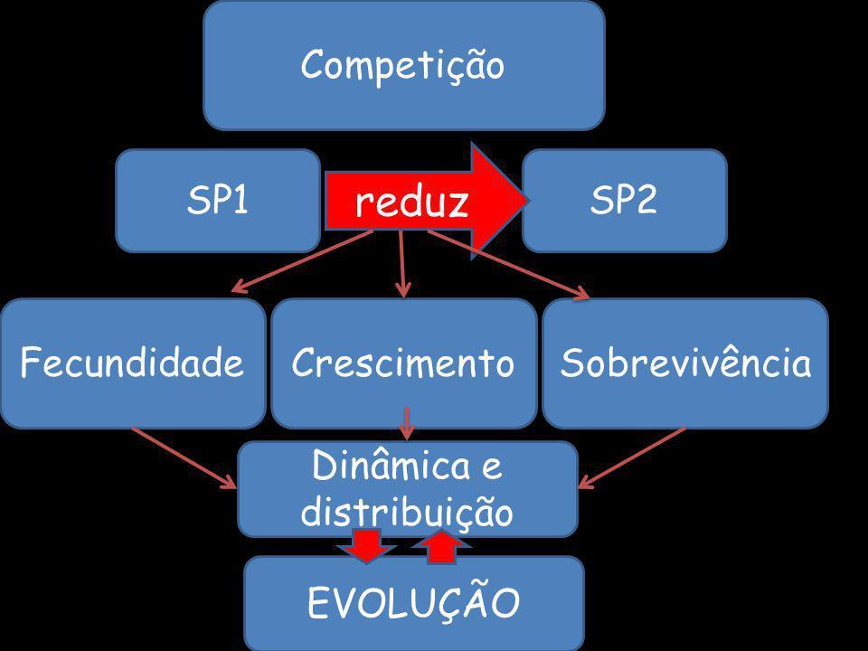 Dinâmica e distribuição
