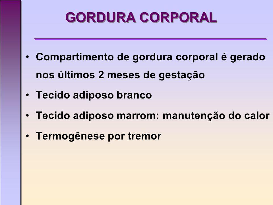 GORDURA CORPORAL Compartimento de gordura corporal é gerado nos últimos 2 meses de gestação. Tecido adiposo branco.