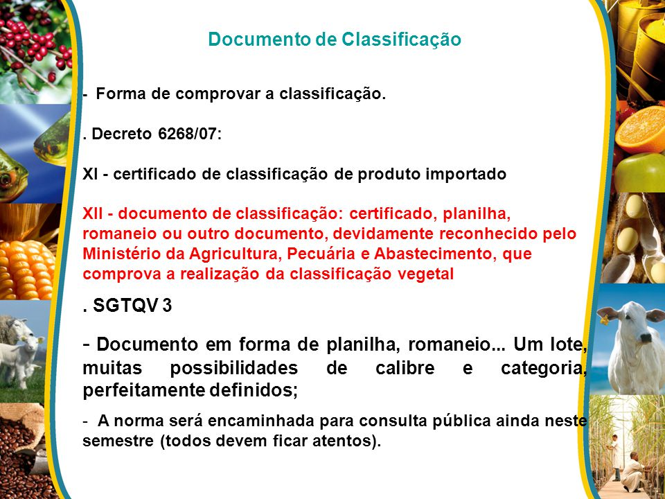 Documento de Classificação