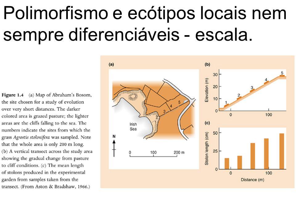 Polimorfismo e ecótipos locais nem sempre diferenciáveis - escala.