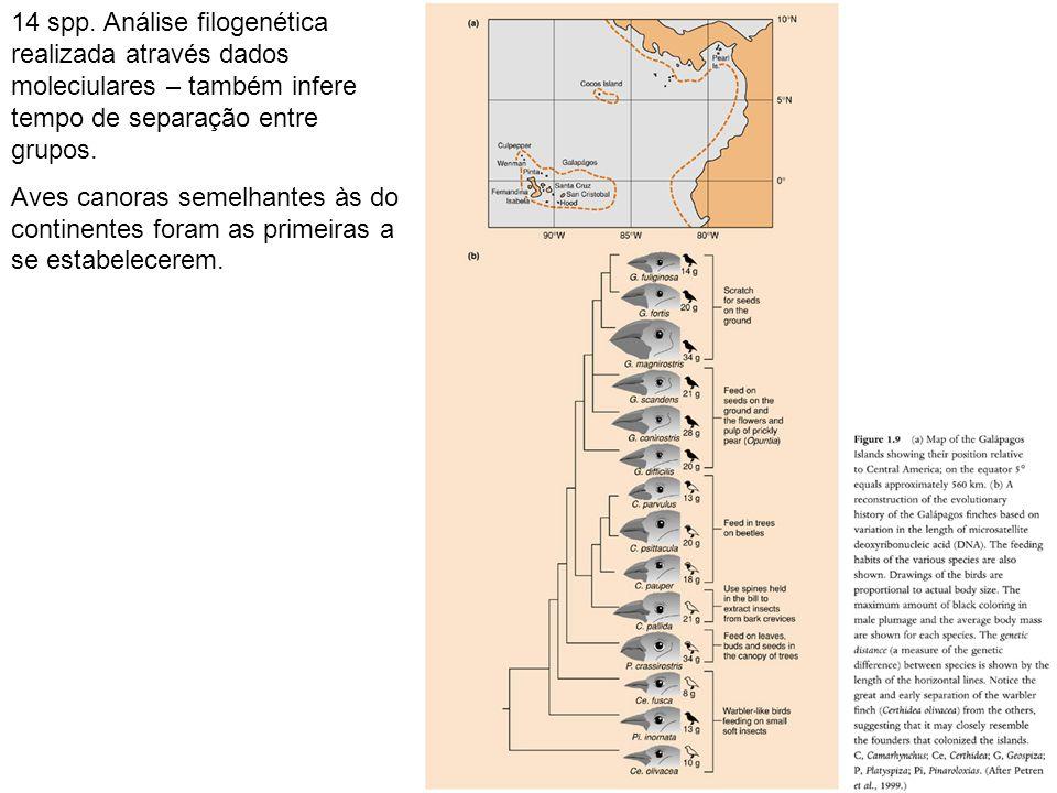 14 spp. Análise filogenética realizada através dados moleciulares – também infere tempo de separação entre grupos.