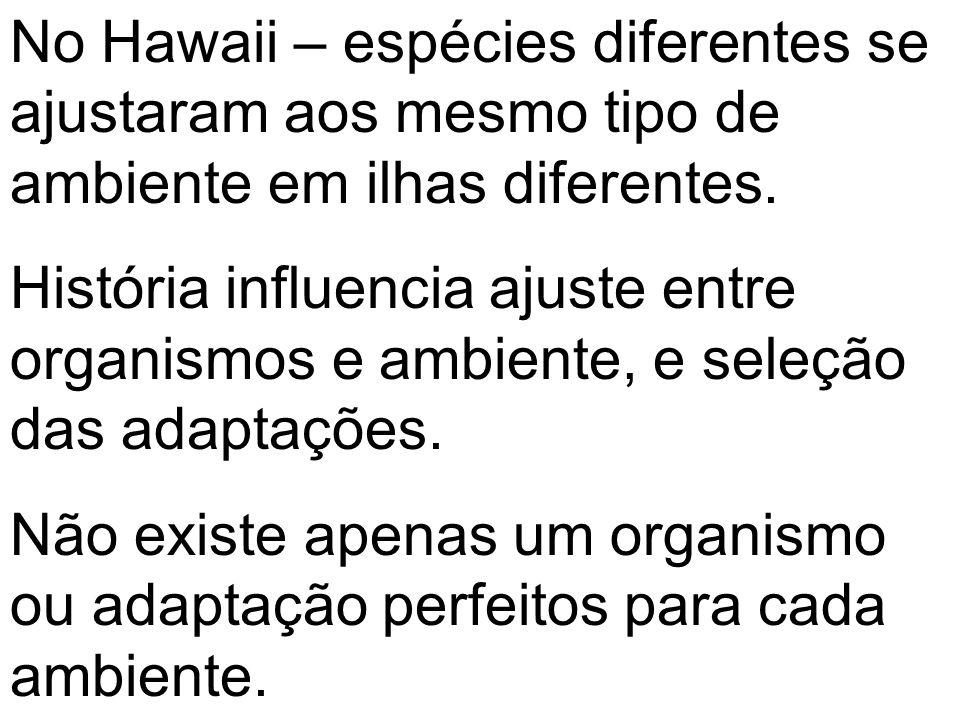 No Hawaii – espécies diferentes se ajustaram aos mesmo tipo de ambiente em ilhas diferentes.