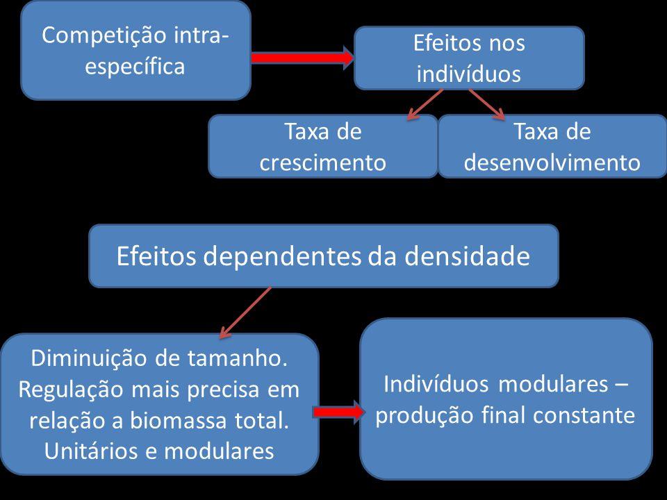 Efeitos dependentes da densidade