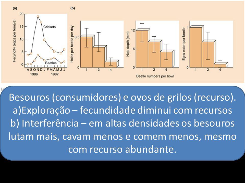 Besouros (consumidores) e ovos de grilos (recurso).